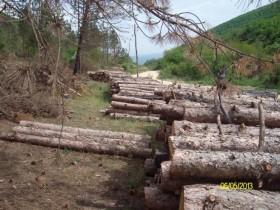 Bespravna seča šuma u Vrtogošu
