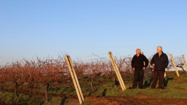 Бивши радници Рубина у винограду, Фото: ЦИНС